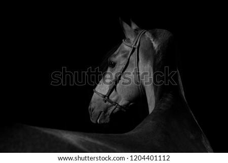 Portrait of horse breeding in studio