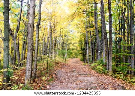 Nature Photography, Road through Woods, Jungle, Fall Foliage,  #1204425355