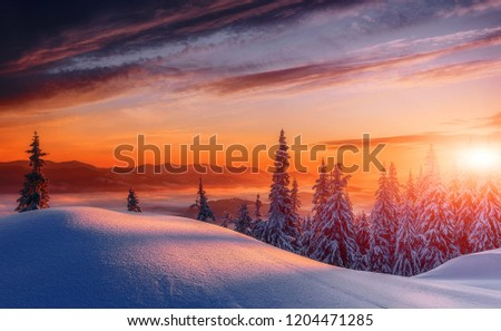 Scenic image of Winter Landscape during sunset. Frosty morning with Colorful sky, calm wintry scene. Ski resort. Impressive picture of wild area. Amazing wintry background. Fantastic Christmas Scene. #1204471285