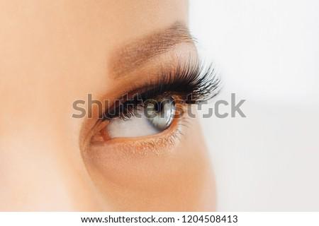 Female eye with extreme long false eyelashes and black liner. Eyelash extensions, make-up, cosmetics, beauty. Close up, macro #1204508413