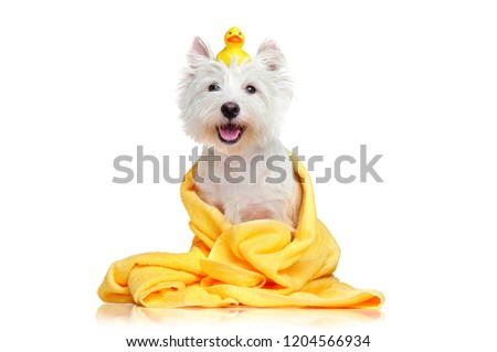 Happy dog after bath wrapped in a towel #1204566934