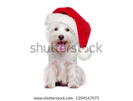 Full length of white west highland terrier wearing Christmas hat #1204567075