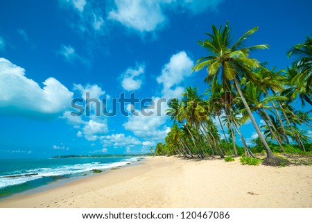 Untouched tropical beach in Sri Lanka #120467086