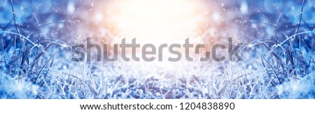 Winter frosty morning. Winter snow background, blue color, snowflakes, sunlight, macro. Frozen grass under the snow, snowflakes and sunlight, rays. #1204838890