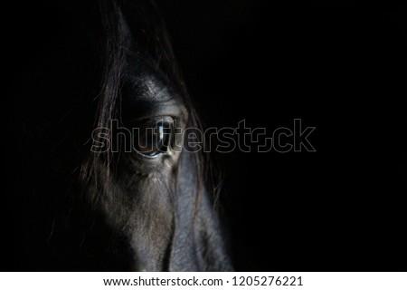 Thoughtful horse eye portrait.