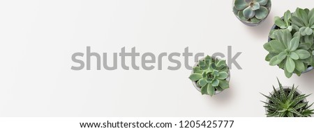 minimalist modern banner or header with succulent plants on a white surface with lots of copyspace for your text - top view / flat lay #1205425777