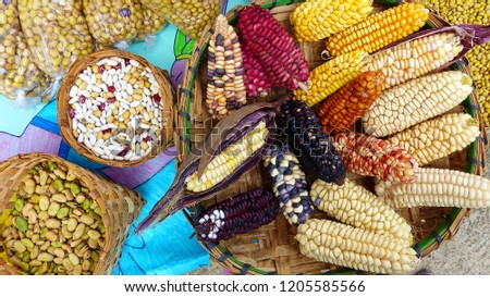Different types of dried ears of colorful corn and beans, the indigenous fair, Azuay province, Ecuador, closeup #1205585566