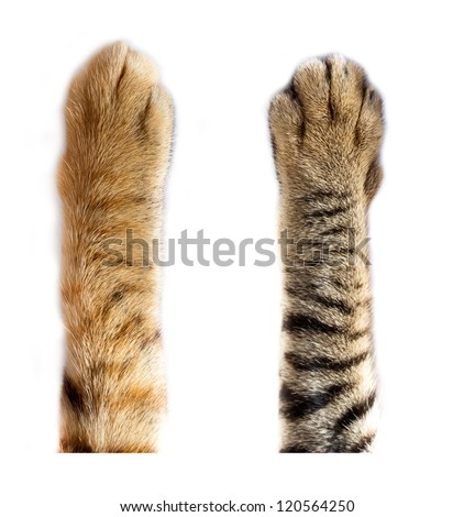 cat paws on white background Royalty-Free Stock Photo #120564250