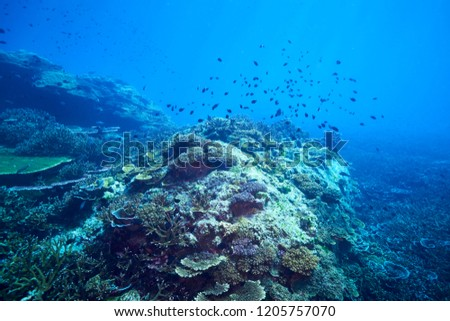 adventure underwater with the best diving spot at Losin south of Thailand  #1205757070