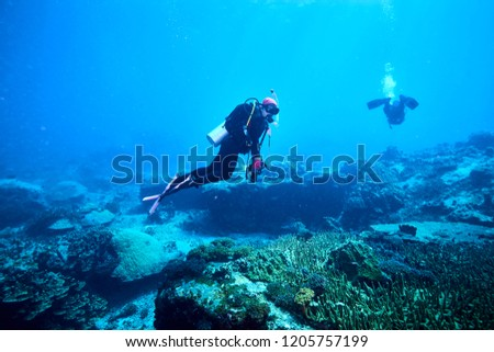 adventure underwater with the best diving spot at Losin south of Thailand  #1205757199