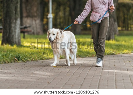 cropped shot of girl walking with guide dog in park  #1206101296
