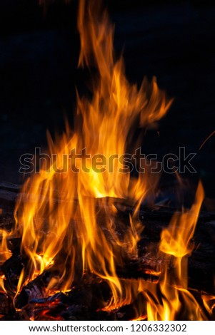 Fire, flames on a black background. Fire for advertising. #1206332302