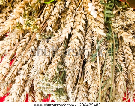 Wheat ears of dry straw of hay collected in a bouquet with seeds and stalks, leaves. The background. Texture. #1206425485