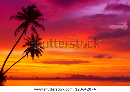 Two palm trees silhouette on sunset tropical beach #120642874