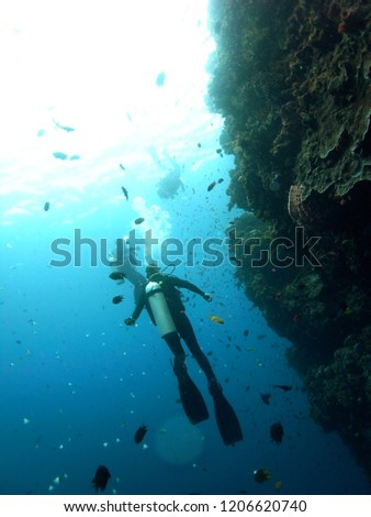 Group of Scuba Diver Divers diving at a wall in Blue Sea  in the Waters of Bunaken Island, Diving Bunaken, Indonesia. #1206620740