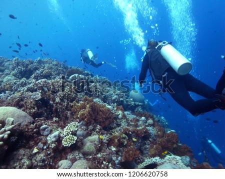 Scuba Diver in Blue Sea  in the Waters of Bunaken Island, Diving Bunaken, Indonesia. #1206620758