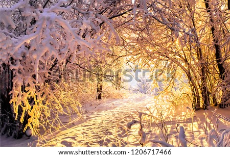 Winter snow forest trees tunnel sunset view. Sunset winter snow forest tunnel scene. Winter snow forest trees tunnel sunset background. Sunset winter snow forest tunnel #1206717466