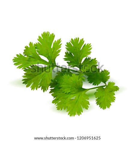 Fresh green plant, nutritious, tasty green parsley. Vector illustration. Vegetables ingredients in triangulation technique. Parsley low poly. #1206951625