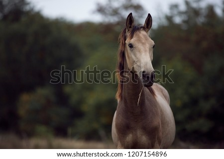 brown horse portrait eating grass on green background