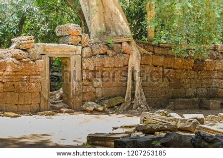 Roots of a spung, the famous tree Tetrameles nudiflora, growing in the Ta Prohm temple ruins in Cambodia and destroying its walls #1207253185