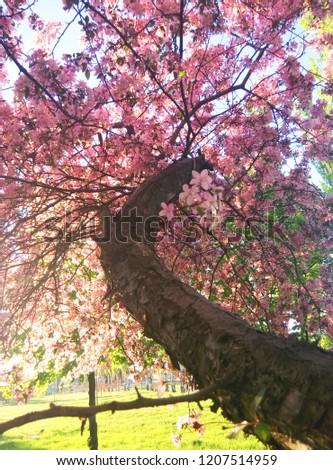 spring blossom tree #1207514959