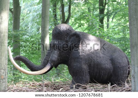 A mammoth is any species of the extinct genus Mammuthus, proboscideans commonly equipped with long, curved tusks and, in northern species, a covering of long hair #1207678681