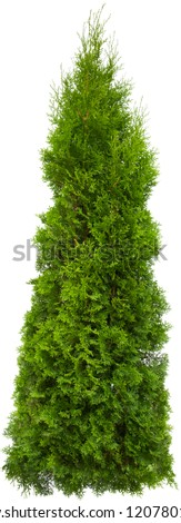 Green Pine, christmas tree isolated on white closeup #1207801168