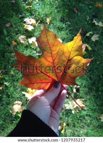 Fall Fall Fall #1207935217