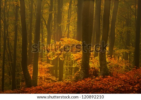 Beautiful forest in a late November autumn day #120892210
