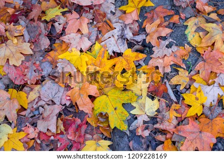 Colorful autumn forest photographs #1209228169