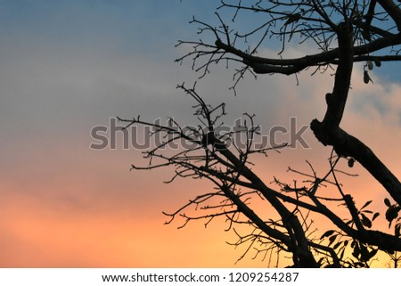 beautiful branches in evening golden clouds in blue sky #1209254287