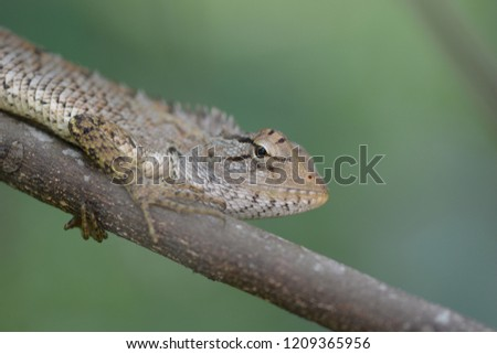 Beautiful Indian Chameleon  #1209365956