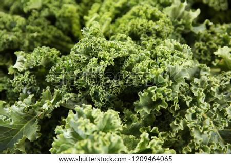 fresh kale cabbage #1209464065