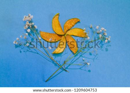 Slices of dried quince and dry flowers, sweet sugar free delicious snack for children and adults, cute bright composition on blue background isolated, flat lay photo, healthy product, eco food concept #1209604753