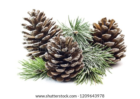 Snowy spruce branch with fir cones isolated on white background. Royalty-Free Stock Photo #1209643978