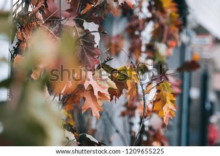 Fall leaves outdoor decor ideas. Toned image #1209655225