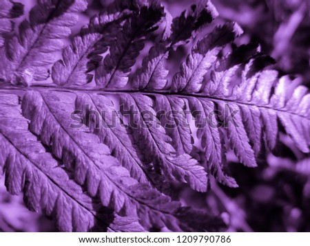 Purple (violet) Fern. Natural textures and patterns of the most ancient fern plants on the planet Earth. Age - 415 million years. Background and visual material for modern natural design. Macro photo #1209790786