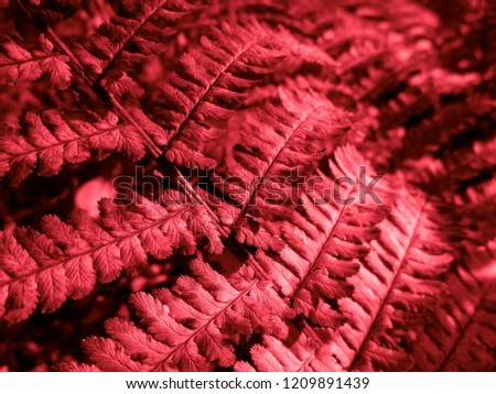 Bloody Red Fern. Natural textures and patterns of the most ancient fern plants on the planet Earth. Age - 415 million years. Background and visual material for modern natural design. Macro photo #1209891439