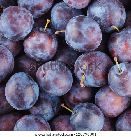 Ripe Plums (Blackthorns) Background, Texture #120996001