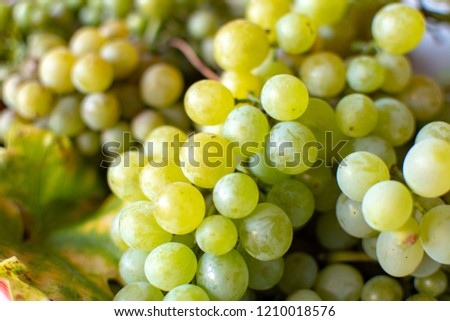 New harvest of white wine grape riesling close up #1210018576