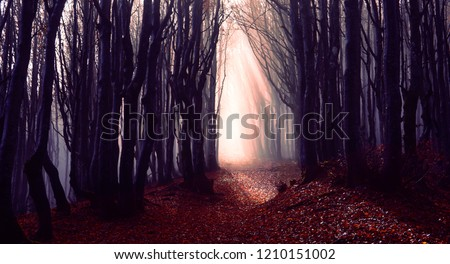 Misty forest path background - Spooky trees in a dark woods  trail with sun beams at autumn season - Foggy morning into the nature with bluish filter look and dark silhouette - Fall lights concept #1210151002