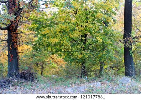 Beautiful autumn landscape with colorful trees. Nature background. Autumn season #1210177861