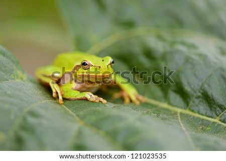 frog is in a natural habitat #121023535