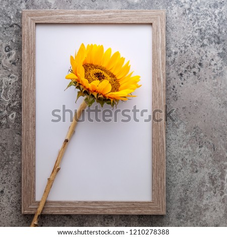 Wooden frame with sunflower on the background of a concrete old wall