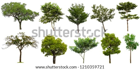Collection Beautiful Trees Isolated on white background , Suitable for use in architectural design , Decoration work , Used with natural articles both on print and website. #1210359721