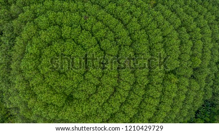 Aerial view rubber tree forest plantation, Top view of rubber latex tree and leaf plantation, Business rubber latex agriculture, Ecosystem and healthy environment concepts and background. Royalty-Free Stock Photo #1210429729