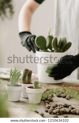 Gardeners hand planting cacti and succulents in white pots on the wooden table. Concept of home gardener.  #1210636102