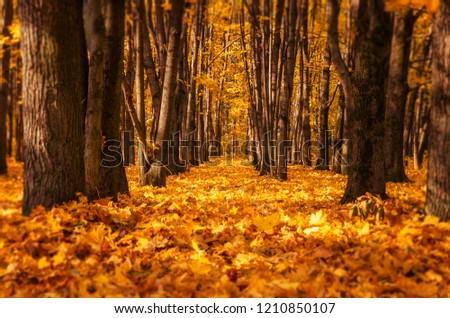 Autumn. Fall scene. Beautiful Autumnal park. Beauty nature scene. Autumn Trees and Leaves #1210850107