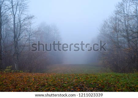Autumn forest mist fog landscape. Forest fog in autumn forest mist scene. Autumn forest fog mist #1211023339