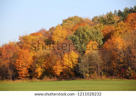 Beautiful picturesque tiers of forest hill in autumn day - green,yellow,orange, brown country landscape on clear blue sky background #1211028232